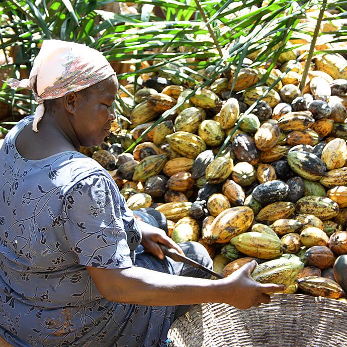 Nachhaltiger Kakao für Prinzen Rolle Ernte