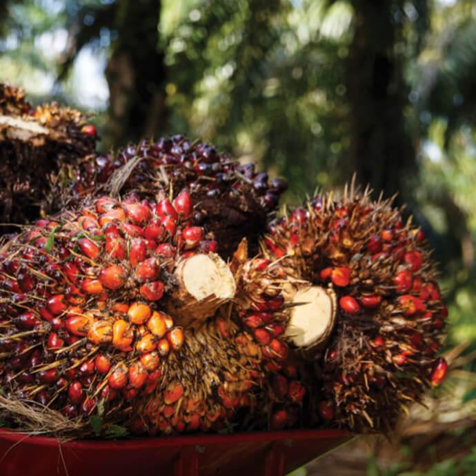 Nachhaltige Palmölgewinnung für Prinzen Rolle