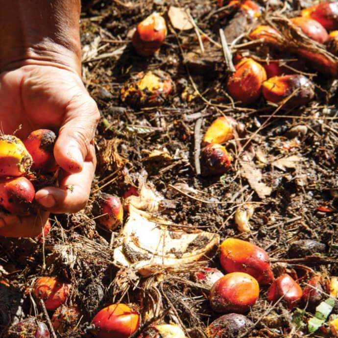 Palmöl für Prinzen Rolle